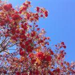 foliage la bellezza dell'autunno