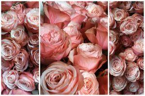 Non son tutte rose - Fior Déco di Simona Rescalli