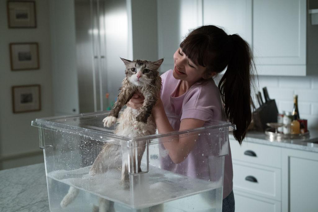 Una vita da gatto - manifesto