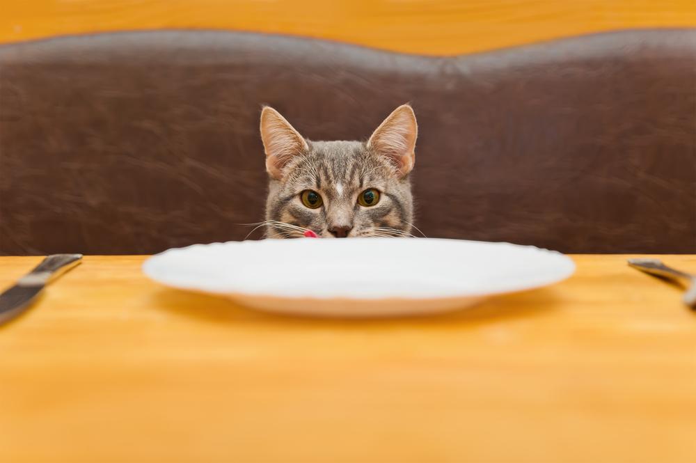 17 febbraio Giornata del Gatto